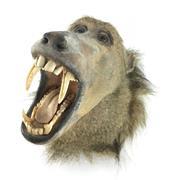 Sale 8758 - Lot 19 - Taxidermy Baboon Head, trophy mount