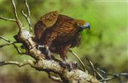 Sale 8427 - Lot 503 - Paul Margocsy (1945 - ) - Australian Wedge-tailed Eagle 14 x 21.5cm