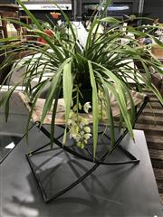 Sale 8787 - Lot 1066 - White Cymbidium Orchid With Five Spikes