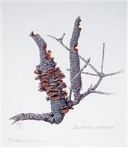 Sale 8992 - Lot 569 - Phillipa Nikulinsky (1942 - ) (2 works) - Banksia Littoralis, 2002 & Hakea Nitida, 2004 21 x 18 cm (frame: 42 x 36 x 4 cm) & 25 x 18...