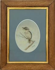 Sale 8995H - Lot 83 - Neville Cayley, Kookaburra, watercolour on paper, image size 25 x 18cm, total size 39 x 26.5cm