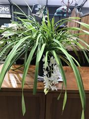 Sale 8787 - Lot 1082 - White Cymbidium Orchid With Single Spike