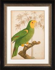 Sale 8342A - Lot 30 - An ornithological study of a parrot and palm, giclee print after the antique original, framed in black and gilt with mount, 82 x 64c...