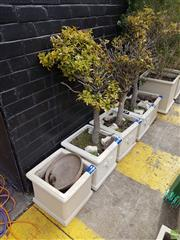 Sale 8601 - Lot 1262 - Collection of Six Concrete Planters with Some Plants & Feet