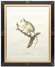 Sale 8651A - Lot 20 - Jean-Baptiste Audebert (1759-1800) - Le Calliriche