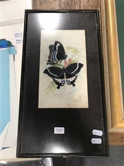Sale 9139 - Lot 2047 - Albert E. Ward Butterflies, 1924, watercolour, (A.F), frame: 43 x 24 signed lower left