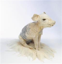 Sale 9096 - Lot 550 - Julia deVille (1982 - ) Piglet, 2009 taxidermy piglet, antique lace, pins, feathers 25 x 23 x 15 cm .