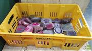 Sale 8390 - Lot 1537 - Box Pink & Purple Polished Agate End Pieces