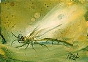Sale 8597 - Lot 516 - Kevin Charles (Pro) Hart (1928 - 2006) - Dragonfly 14 x 20cm
