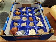 Sale 8863 - Lot 1017 - Box of Assorted Fossils