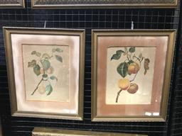 Sale 9106 - Lot 2019 - A pair of nineteenth of century still life watercolours of plums, dated 1819, frame: 37 x 31 cm