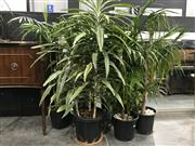 Sale 8809 - Lot 1003 - Collection of Indoor Plants
