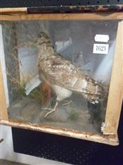 Sale 7905A - Lot 1623 - Victorian Taxidermy Woodcock in Case