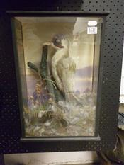 Sale 7905A - Lot 1618 - Victorian Taxidermy Green Woodpecker in Case