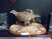 Sale 7905A - Lot 1619 - Taxidermy Red Legged Partridge