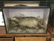 Sale 8758 - Lot 60 - Antique Taxidermy Badger Diorama in Timber Case