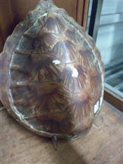 Sale 7905A - Lot 1693 - Small Sea Turtle Shell