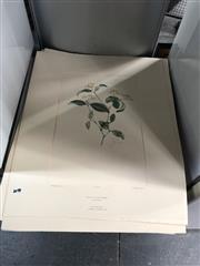Sale 8865 - Lot 2071 - Pair of Engravings Banks Florilegium Engravings, editions 18/ 100, each (unframed)
