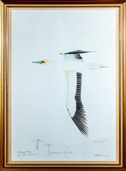 Sale 8882H - Lot 28 - ARTIST UNKNOWN C20th - Gannet Study signed indistinctly lower right