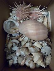 Sale 7905A - Lot 1651 - Box of Interesting Shells
