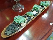 Sale 8637 - Lot 1013 - Timber Canoe Form Tray of Succulents
