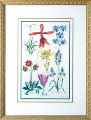 Sale 8470H - Lot 9 - Botanical Print Irises & Poppies, frame size 64 x 49cm