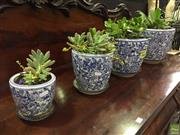 Sale 8648C - Lot 1009A - A set of four graduated ceramic planters with succulents
