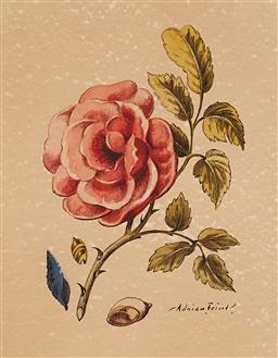 Sale 9195 - Lot 583 - ADRIAN FEINT (1894 - 1971) - Camelia 26 x 22 cm (frame: 45 x 41 x 3cm )