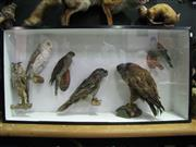 Sale 8331A - Lot 591 - Diorama with Taxidermy European Hawks & Owls