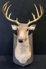 Sale 9026 - Lot 1076 - Mounted Plastic Buck (H87 x W45 x D52cm)