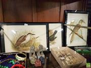 Sale 8573 - Lot 2089 - 3 Broinowski, Bird Lithographs incl. Satin Bower Bird; Nankean Night Heron; Channel Bill