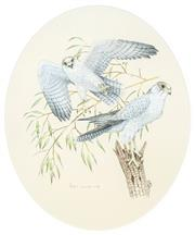 Sale 8491 - Lot 2012 - Peter Longhurst (1922 - ) - Gray Falcon 33 x 28cm