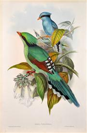 Sale 8427 - Lot 567 - John Gould (1804 - 1881) - CISSA VENATORIA: Hunting Cissa 54.5 x 37cm (sheet size)