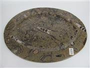 Sale 8431A - Lot 619 - Fossil Orthocearas & Goniatites Plate (Devonian Period), Morocco
