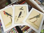 Sale 8413T - Lot 2071 - Unframed Paper Prints incl Ground Parrot Watercolour 1791 (3)