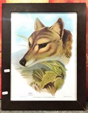Sale 8941 - Lot 2081 - Thylacine Print 39x29cm