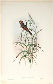 Sale 9037A - Lot 5051 - John Gould (1804 - 1881) - EMBERIZA PUSILLA PALLAS: Dwarf Bunting hand-coloured lithograph, with letterpress text sheet (unframed)