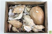 Sale 8490 - Lot 316 - Shell Collection incl Clam and Conch