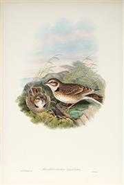 Sale 9037A - Lot 5054 - John Gould (1804 - 1881) - MELANOCORYPHA CALANDRA: Calandra Lark hand-coloured lithograph, with letterpress text sheet (unframed)