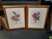 Sale 8627 - Lot 2007 - Pair of Botanical Decorative Prints, 63 x 53cm (frame size)