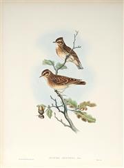 Sale 9037A - Lot 5057 - John Gould (1804 - 1881) - LULLUA ARBOREA: Woodlark hand-coloured lithograph, with letterpress text sheet (unframed)
