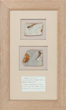 Sale 9155H - Lot 71 - A framed two piece reproduction of fossilised fish. Frame size 72x45cm