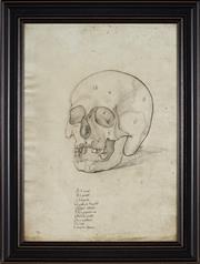 Sale 9041 - Lot 2083 - A Decorative Print of a Renaissance Anatomical Study of a Human Skull, 72.5 x 55.5cm (frame)