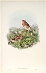 Sale 9037A - Lot 5062 - John Gould (1804 - 1881) - ANTHUS CERVINUS: Red-throated Pipit hand-coloured lithograph (unframed)