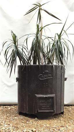 Sale 9175G - Lot 70 - Antique cast iron boiler planter with established dracaena plant .Boiler size :57cm H x54cm D. plant size :145cm H