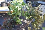 Sale 8390 - Lot 1352 - Three Varied Plants in Hanging Planters