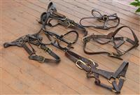 Sale 8934H - Lot 5 - Six leather Stallion head collars including Agincourt