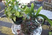 Sale 8390 - Lot 1354 - Three Varied Plants in Hanging Planters