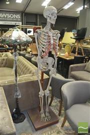 Sale 8440 - Lot 1031 - Skeleton on Stand
