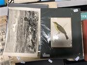 Sale 8789 - Lot 2156 - 3 Works: Melodius Willow Warbler, hand coloured engraving ; Newspaper Print of Sydney & Carmen Saez - Love Birds, print